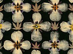 black floral pattern   Gunilla Lagerhem Ullberg - Herbarium för Kasthall   Pressed violas