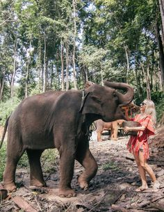 Omg, I'm so excited to tell you about Thailand I don't know where to start. The Tourism Authority of Thailand reached out to me about their yearly campaign Amazing Thailand Women's Journey. Elephant Sanctuary Thailand, Thailand Elephants, Thailand Travel Guide, Asia Travel, Visit Thailand, Croatia Travel, Hawaii Travel, Italy Travel, Chiang Mai Elephant