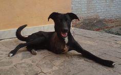 Adoção especial salva animais deficientes do abandono - Comportamento - iG