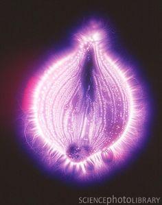 Kirlian image of an onion