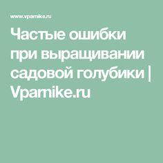 Частые ошибки при выращивании садовой голубики | Vparnike.ru