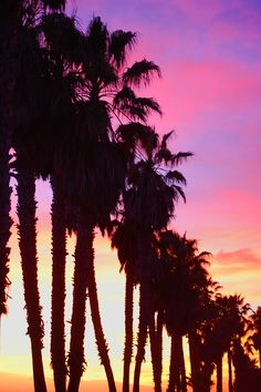 Beautiful picture of palm trees