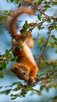 Squirrel Pictures, Wild Animals Pictures, Cute Wild Animals, Rare Animals, Cute Little Animals, Cute Animal Pictures, Cute Funny Animals, Animals Beautiful, Animals And Pets