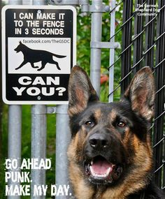 K9 - I can make it to the fence in 3 seconds, can you?
