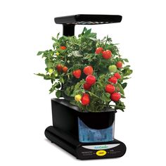 Aerogarden Gourmet Herb 3 Pod Refill Kit Herb Seeds 640 x 480