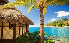 palm trees, sea, sand, tropical paradise