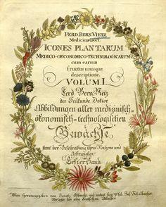 1800 - Icones plantarum medico-oeconomico-technologicarum cum earum fructus ususque descriptione = - Biodiversity Heritage Library