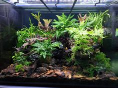 Favourites: dendro terrarium by Aquarium Design Group A stunning environment for the dart frogs to thrive.