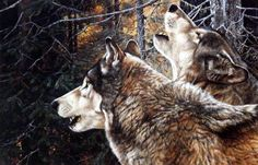 In the Andrew Kiss art print UNITY, two wolves create a moonlight chorus. Howling is the one form of communication used by wolves that is intended for long distance. A defensive howl is used to keep t