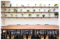 Plant Wall for Kitchensurfing's NYC office designed by Dani Arps with potted plants by The Sill
