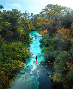 11 Florida Springs The Kids Will Be Begging to Jump Into This Summer Spring Hill Florida, Road Trip Florida, Places In Florida, Visit Florida, Florida Vacation, Florida Travel, Vacation Places, Florida Beaches, Vacation Spots