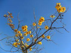 Flores da Caatinga.