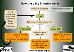 why finance animal cruelty - reason to ditch dairy Artificial Insemination, News Memes, Childfree, Why Vegan, Vegan News, Do You Really, Animal Rights, Vegan Life, Worlds Of Fun