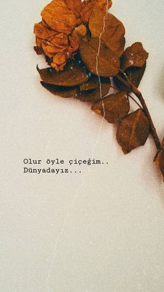 Song Qoutes, True Quotes, I Spy Diy, Happy Life Quotes, Happy Words, Instagram Quotes, Galaxy Wallpaper, Cool Words, Quotations