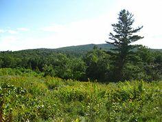 John Kulish Forest | Hancock NH