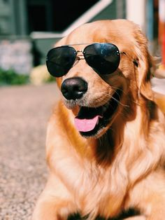 Golden Retriever - Why Are They The Perfect Pets - Doggie Woof Fluffy Puppies, Cute Dogs And Puppies, I Love Dogs, Doggies, Animals And Pets, Cute Animals, Retriever Puppy, Dog Pictures, Animal Pictures