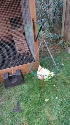 Building A Chicken Coop 739786676268911105 - Pecking basket / enrichissement poules / enrichment for chickens Source by josphinelefv Chicken Garden, Chicken Life, Backyard Chicken Coops, Chicken Coop Plans, Building A Chicken Coop, Chicken Runs, Diy Chicken Coop, Backyard Farming, Chickens Backyard