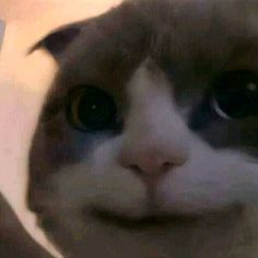 Cat Memes, Cool Cats, Projects To Try, Cool Stuff, Pets, Animals, Vsco, Sticker, Animales