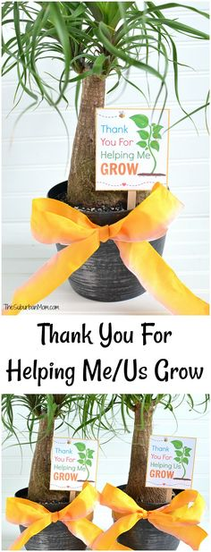 End of the year teacher gift idea Thank You For Helping Me Grow Free Printable. For room moms, a Thank You For Helping Us Grow Free Printable for a class gift too.