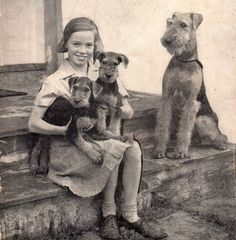 Cute girl with Airedale Terriers – mama and her two pups, 1947