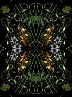 Bloom Day Scan Kaleidoscope - © Craig Cramer / Ellis Hollow