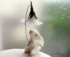 This precious little bunny has made a little fairy flower umbrella from this beautiful flower, to prevent the spring rains from falling on its soft