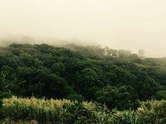 Real jungle