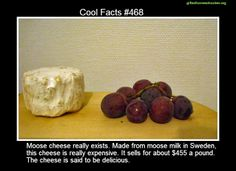 Cool facts #468  http://en.wikipedia.org/wiki/Moose_cheese