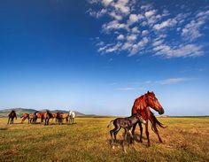 Dobrogea Romania /village Mahmudia Danube Delta, Romania, Cruise, Horses, Country, Life, Animals, Animales, Cruises
