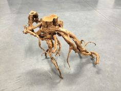 UW07 Redmoor Wood -- driftwood shrimp moss discus manzanita spiderwood spider  #wood