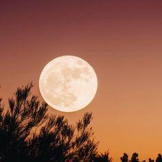 Tout dans la nature est par essence cyclique : les saisons, le jour / la nuit, la course des astres.  Et nous, en tant qu'êtres humains, nous n'échappons pas à la régle.   Les femmes en particulier sont confrontées à leur nature cyclique chaque mois, lié au cycle de la lune.  D'ailleurs, le terme « menstruation» vient du latin qui veut dire « mois ». Il existe un parallélisme entre les mots « mois » et « lune » dans différentes langues.  Les différentes phases du cycle féminin ne se… Gothic, Celestial, Outdoor, Different Languages, Naturopathy, Latin Dance, Seasons, Outdoors, Goth