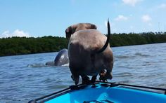 Dog on a Kayak Spots a Dolphin and Decides to Be One of Them (VIDEO)