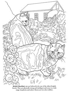 The Cat Lovers Colouring Book Sample Pages Dover Publications