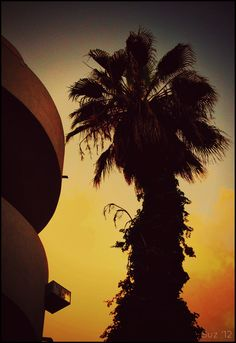 The sillouhette of a palm-tree in the sunset of Tel Aviv.