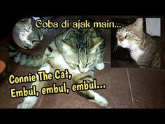 Temu Kangen Connie The Cat Embul Embul... Di Bandung - YouTube Cats, Youtube, Animals, Gatos, Animais, Animales, Animaux, Animal, Kitty