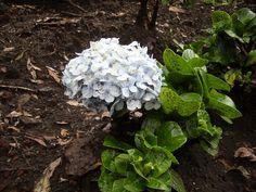 una flor muy bonita