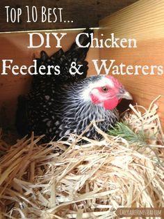 Top Ten Best DIY Chicken Waterers and Feeders | Chickadee Homestead (.com):
