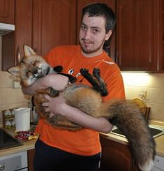 A pet fox would be awesome : ) I wonder what their temperament is like though, being undomesticated