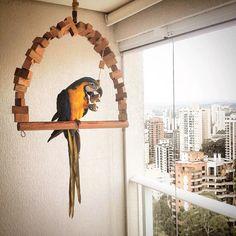 balanço para arara   linha eco toys   encanto das aves ! Bird Cage Stand, Pet Bird Cage, Bird Perch, Bird Cages, Green Wing Macaw, Homemade Bird Toys, Parrot Stand, Budgies, Parrots