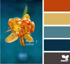 flora color: burnt orange, golden glow dusty aqua, denim and charcoal gray
