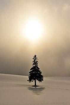 Winter Solitude...  <3<3<3<3