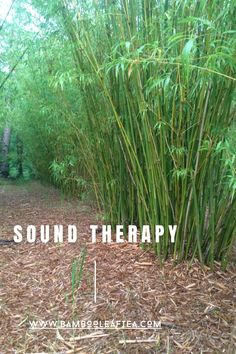 Sound therapy for your day - relax, breathe, and immerse in the beautiful sounds of bamboo. Bamboo Leaves, Breathe, Therapy, Relax, Herbs, Day, Plants, Beautiful, Herb