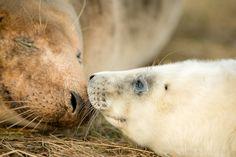 Patrolowicze WWF pilnują, aby foki wychodzące na plażę otrzymały potrzebną im opiekę oraz zapewniają im  niezbędny spokój. W dużym przybliżeniu można oszacować, że w latach 2010- 2012 wolontariusze objęli patrolem w sumie 55 000 kilometrów wybrzeża, co daje w sumie trasę długości 1,37 równika!