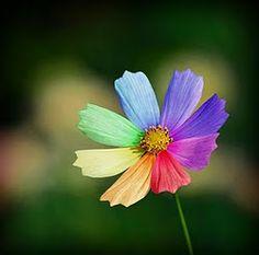 """A primavera chega com sua singularidade e cores. Enfeita nossas ruas, torna nossos dias menos cinzentos. E claro que o """"Mosaico de Livro"""" ..."""