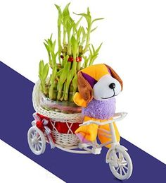 Useful Gift Varieties to Send Mother Days Gifts to Delhi  http://goo.gl/8v36Oo
