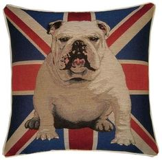 English Bulldog: brought this home from London last year...Name's Churchill & sits on my white sofa!!