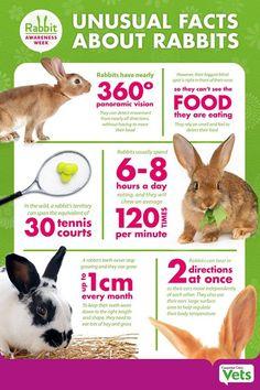 Facts about rabbits Rabbit Treats, Rabbit Toys, Bunny Toys, Pet Rabbit, Bunny Bunny, Rabbit Life, House Rabbit, Rabbit Facts, Flemish Giant Rabbit