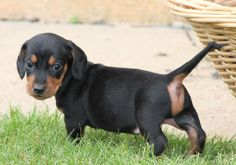 Lovely guy   http://ift.tt/2neAoQH via /r/dogpictures http://ift.tt/2n81MTS  #lovabledogsaroundtheworld