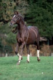 moroccan/horses - Google Search