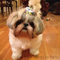 Bright Colorful Dots Dog Bow by BeautybyParis on Etsy Kittens And Puppies, Cute Cats And Dogs, Cute Dogs And Puppies, I Love Dogs, Shih Tzu Puppy, Shih Tzus, Cutest Animals, Cute Baby Animals, Dog Items
